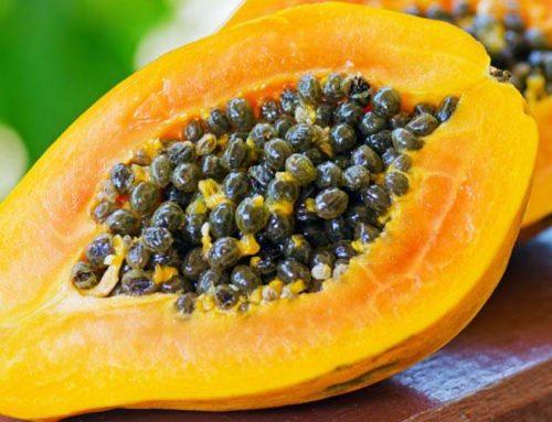 Papaja – owoc o leczniczym działaniu
